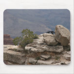 Ravens in Grand Canyon Mouse Mat