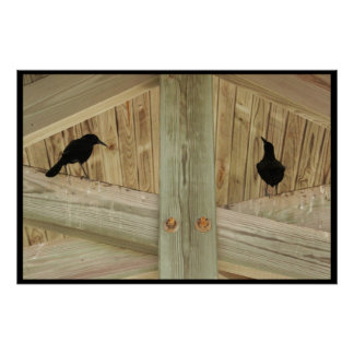 Ravens in the Rafters Poster