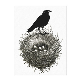 Raven's Nest with Eggs Canvas Print