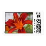 Ravishing Red Daylily Stamps