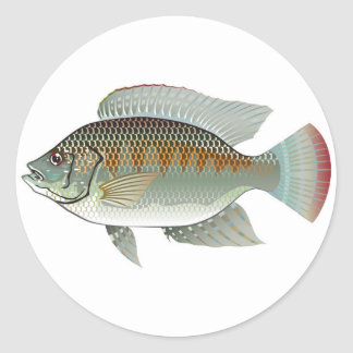 Raw Seafood Tilapia Fish Vector Classic Round Sticker