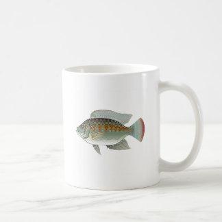 Raw Seafood Tilapia Fish Vector Coffee Mug