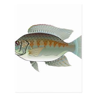 Raw Seafood Tilapia Fish Vector Postcard