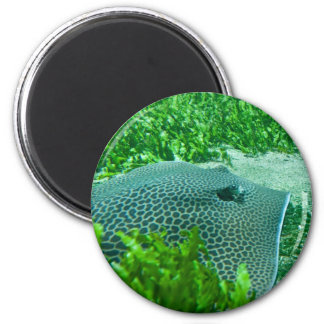 Ray 2 Inch Round Magnet