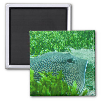 Ray 2 Inch Square Magnet