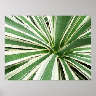 Raya verde y blanca de la planta del agavo póster