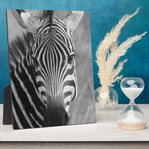 Rayas con clase africanas lindas del safari de la  placas