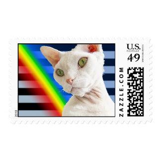 Rayas del arco iris del gato de Devon Rex del blan