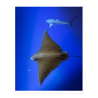 Rayo de águila y submarino manchados del tiburón tarjeta postal