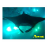 Rayo de Manta de Hawaii Tarjetas Postales