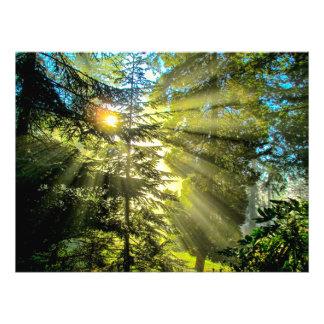 Rayos de la luz a través de los árboles cojinete