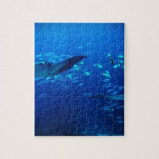 Rayos de Manta Puzzle Con Fotos