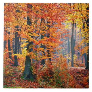 Rayos de sol coloridos hermosos del bosque de la azulejo cuadrado grande