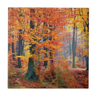 Rayos de sol coloridos hermosos del bosque de la azulejo cuadrado pequeño