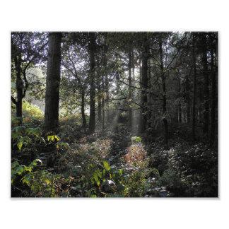 Rayos de sol en la impresión de la foto del bosque fotografías