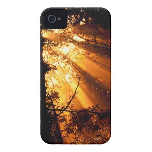 Rayos de sol místicos de los árboles olímpicos Case-Mate iPhone 4 coberturas