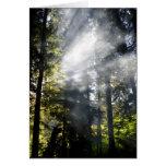 Rayos de sol tarjeta de felicitación