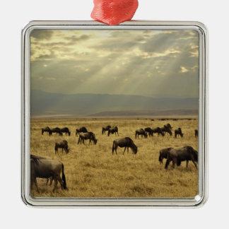 Rayos de sol y Wildebeest, taurinus del Adorno Navideño Cuadrado De Metal
