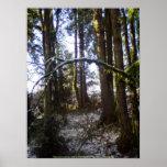 Rayos de Sun del bosque en la nieve #32 Poster