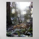 Rayos de Sun del bosque en la nieve #68 Posters