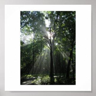 Rayos de Sun, mañana brumosa Posters