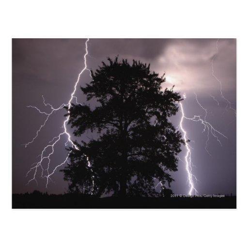Rayos en el cielo detrás de un árbol postales