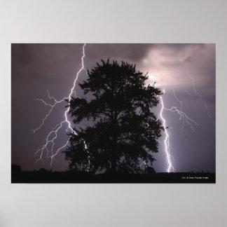 Rayos en el cielo detrás de un árbol póster