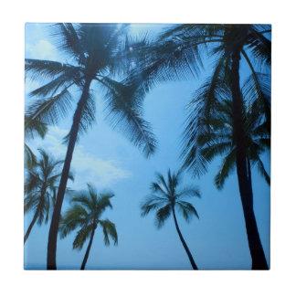 Rayos hermosos de Sun en teja hawaiana de las palm