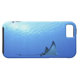 Rayos que nadan, Saipán, Northern Mariana Islands iPhone 5 Carcasas