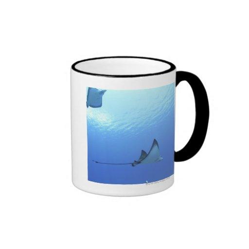 Rayos que nadan, Saipán, Northern Mariana Islands Taza A Dos Colores