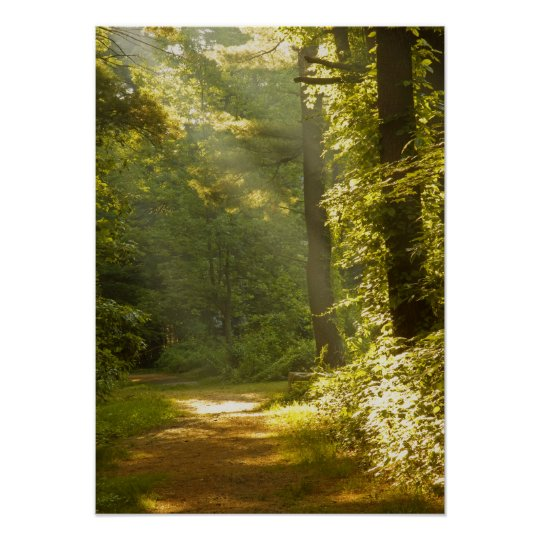 Rays of Light in the Forest Poster