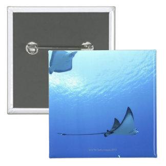 Rays swimming, Saipan, Northern Mariana Islands Button