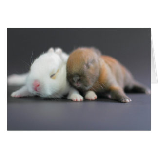 Raza de la mezcla de los conejos enanos de Netherl Felicitacion