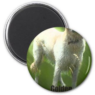 Raza de Marley del golden retriever Imán Redondo 5 Cm