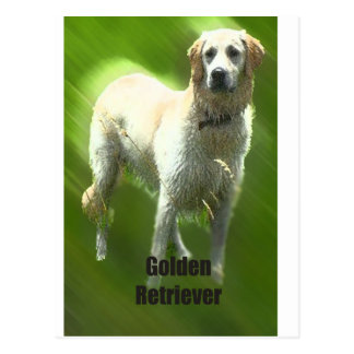Raza de Marley del golden retriever Postales