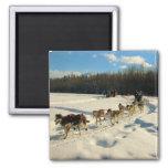 Raza de perro de trineo del rastro de Iditarod Iman De Nevera