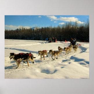 Raza de perro de trineo del rastro de Iditarod Póster