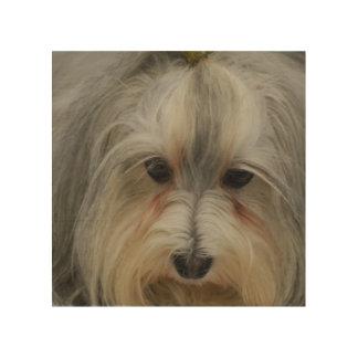 Raza del perro de Havanese Impresión En Madera
