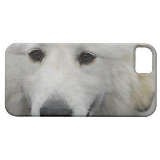 Raza del perro de los grandes Pirineos iPhone 5 Case-Mate Carcasas