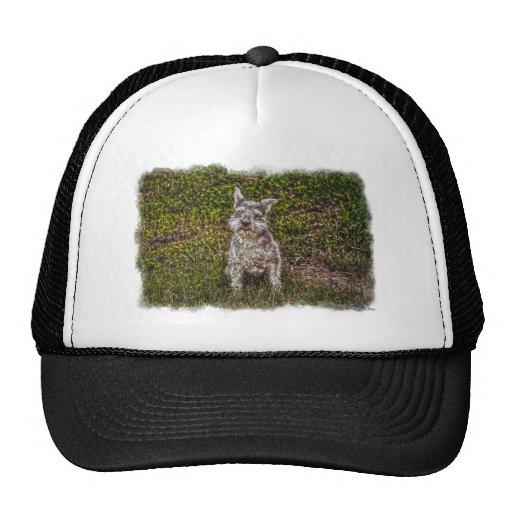 Raza del perro de los Perro-amantes del mascota de Gorras De Camionero