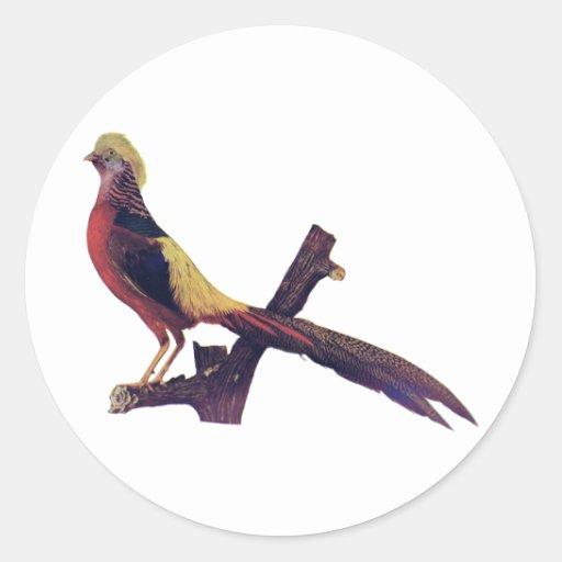 Razas americanas del pájaro etiqueta