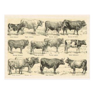 Razas de ganados, Francia, diversas razas 3 Tarjetas Postales