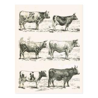Razas de ganados, Francia, diversas razas Tarjeta Postal