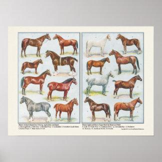 Razas del poster de los caballos