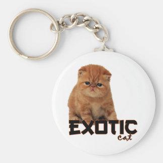 razas exóticas del gato llavero redondo tipo pin