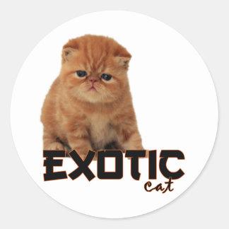 razas exóticas del gato etiqueta redonda