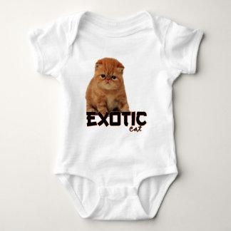 razas exóticas del gato playera