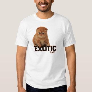 razas exóticas del gato playeras