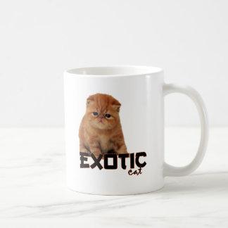 razas exóticas del gato taza