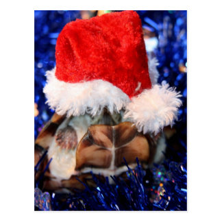 Razorbacked Musk Turtle, Santa Hat over head Postcard